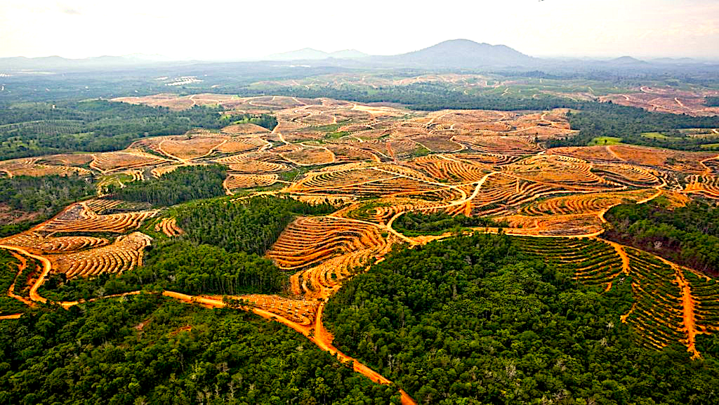 Earthqualizer uses geospatial AI to track deforestation-free palm oil supply chains in Southeast Asia